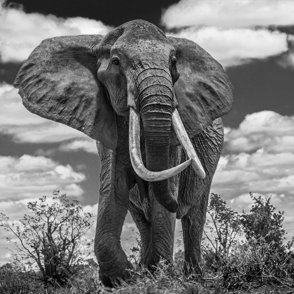 David Yarrow, Tsavo East