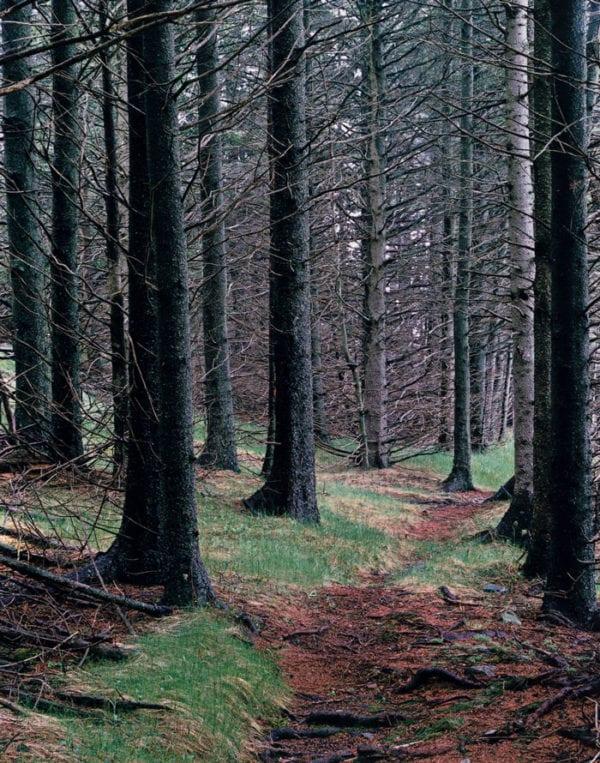 Eliot Porter, Path In Woods. Great Spruce Head Island, Maine, 1981
