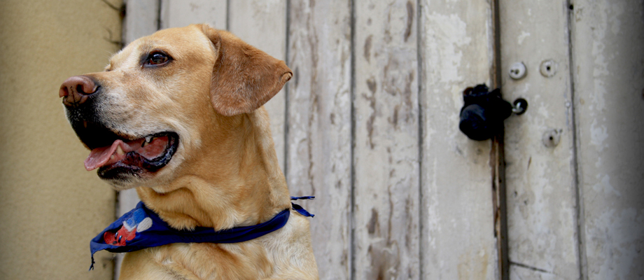 20 Tips for Travel with Your Pets