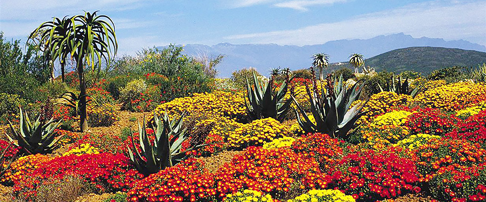10 Spectacular Places To See The Cape 39 S Flowers Holidays Kids