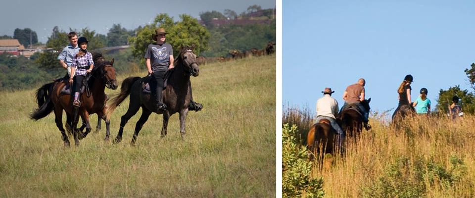 Image of outride at Cape Riding Horse, Pretoria