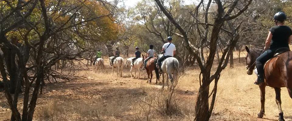 Harties Horse Academy