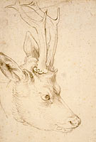 Альбрехт Дюрер: Head of a Roebuck