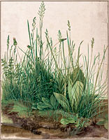 Albrecht Dürer: The Large Piece of Turf