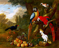 Якоб Богдани: Two Macaws, a Cockatoo and a Jay, with Fruit