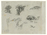 Sketches from South America. Botanical sketches. Flying crane