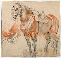 Peter Paul Rubens: Saddled Horse, c. 1615-1618