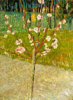 Almond tree in blossom (2)