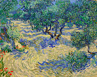 Olive Orchard / Olive Grove