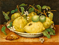 Giovanna Garzoni: Still Life with Bowl of Citrons