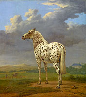 "Paulus Potter: The Piebald ""Horse"""