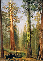 Альберт Бирштад: The Grizzly Giant Sequoia, Mariposa Grove, California