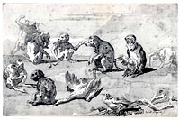 Eight Monkeys, a Dead Goose, and a Cormorant