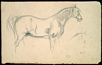 Studies of a Horse in Profile