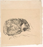 A Cat Curled Up, Sleeping