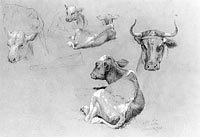 Studies of Cows and Calves