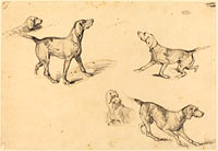 Five Studies of Hunting Dogs