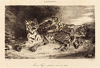 Young Tiger Playing with its Mother (Jeune tigre jouant avec sa mère) (1)