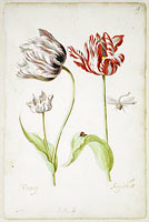 Two Tulips with Insects, Jacob Marrel