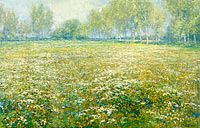 Meadow in Bloom