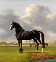Энтони Оберман: Adriaan van der Hoop's Trotter 'De Vlugge' (The Fast One) in a Meadow