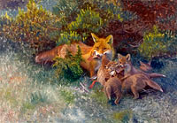 Fox with Cubs
