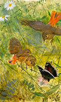 Redstarts and Butterflies. Five studies in one frame, NM 2223-2227