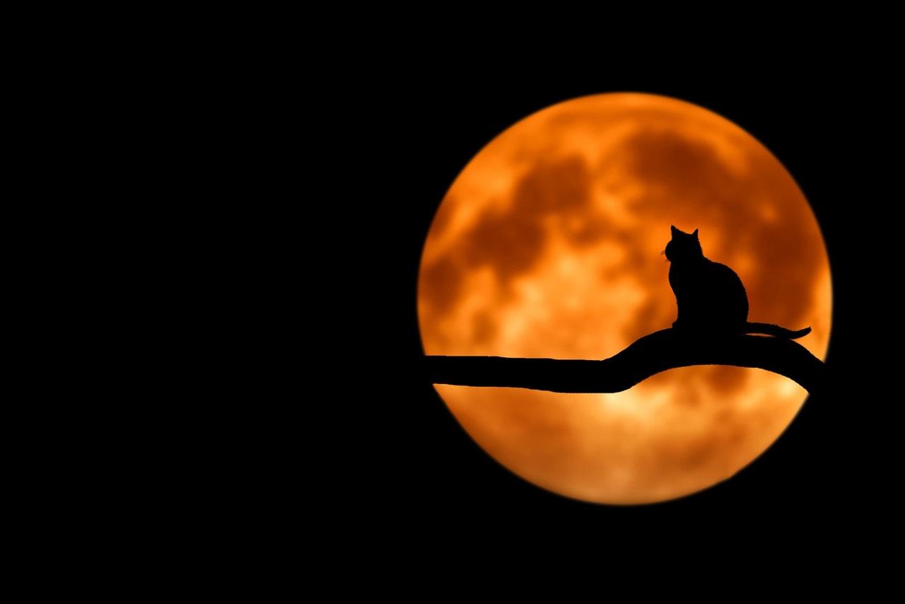 5 Fun & Festive Halloween Blogging Activities