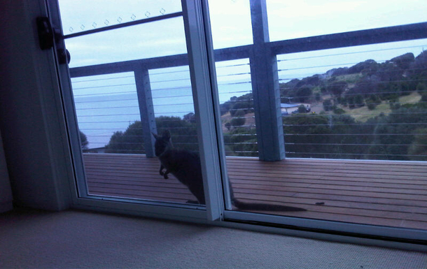 Home exchange in,Australia,PENNESHAW,An inquisitive visitor