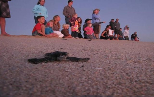 BoligBytte til,Mexico,La Paz,Help save the turtles by joining the hatchling rel