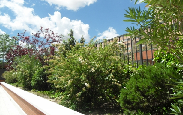 BoligBytte til,Spain,ALCORCON,jardines