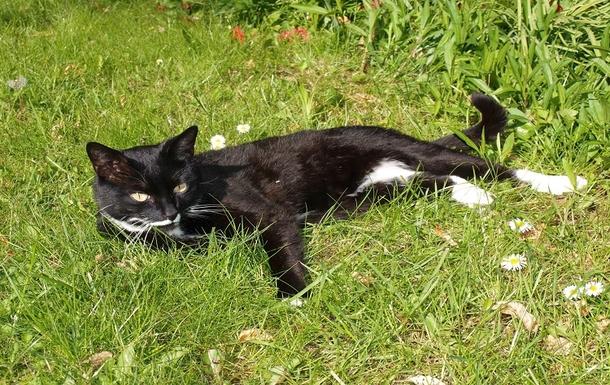 BoligBytte til,United Kingdom,Edinburgh,Our cat Max
