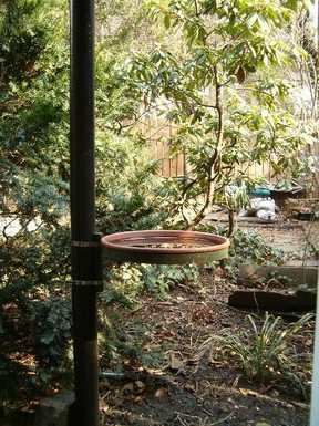 garden bird bath, outside our window