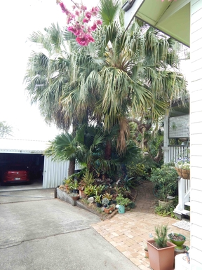 Home exchange in,Australia,Brisbane, 10k, N,Our Tropical Back Garden