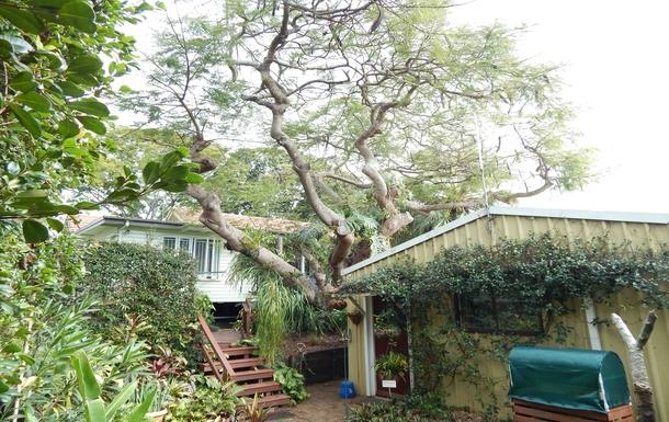 Home exchange in,Australia,Brisbane, 10k, N,From Lower Garden