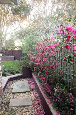 Home exchange in,Australia,Cronulla,Side walkway to back garden