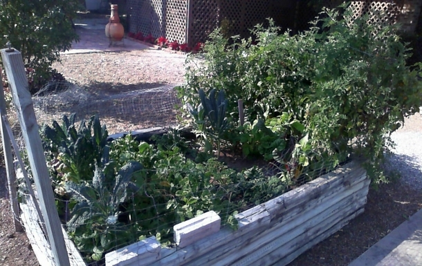 Home exchange in,United States,Alamo,Our organic garden in the backyard