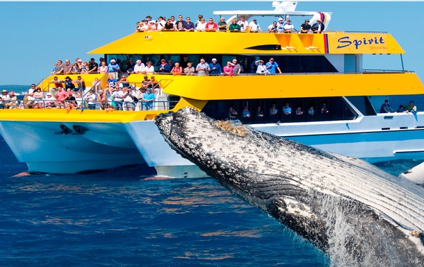 Home exchange in,Australia,Hervey Bay,Whale watching off Hervey Bay coast