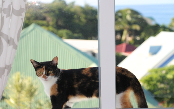BoligBytte til,Guadeloupe,Le Gosier, 2k, E,our calico cat