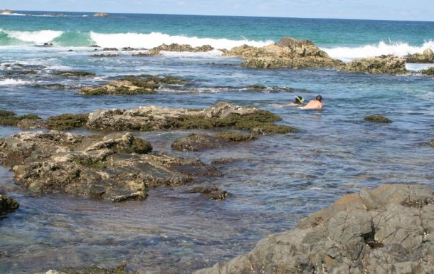 Home exchange in,Australia,POTTSVILLE,Snorkelling at Hastings Point 5 mins