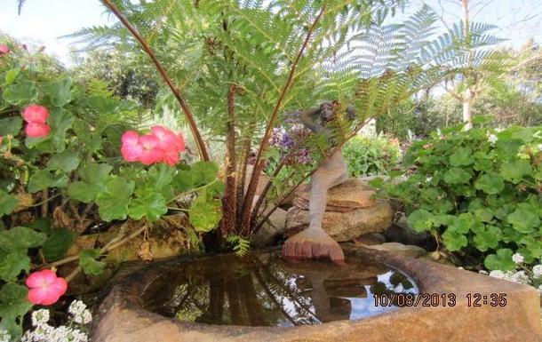 Home exchange in,Australia,COFFS HARBOUR,Bird bath in side garden