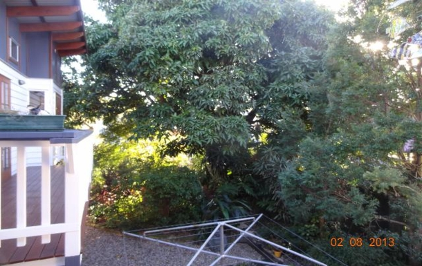 Home exchange in,Australia,WOOLOOWIN,What you might see in this Mango tree is amazing!