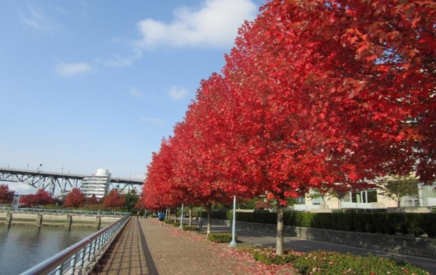 fall foliage on seawall