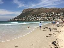 BoligBytte til/South Africa/Cape Town/Local beach.  Warm water & white fine sand.