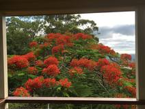 Boligbytte i /Australia/Montville/Looking from the verandah to the coast - December