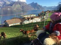 Huizenruil in /Switzerland/Beckenried