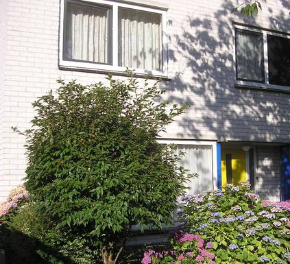 Boligbytte i  Nederland,Amersfoort, Utrecht,Amersfoort - senior home and holiday cottage.,Home Exchange & House Swap Listing Image