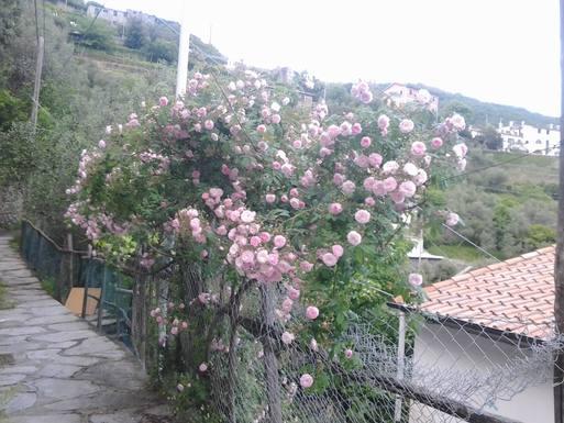 BoligBytte til Italien,Cogorno, Liguria,Ancient house see view in olive groove,Boligbytte billeder