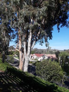 Bostadsbyte i USA,Mission Viejo, California,Lovely home in the heart of Orange County, Ca,Home Exchange Listing Image