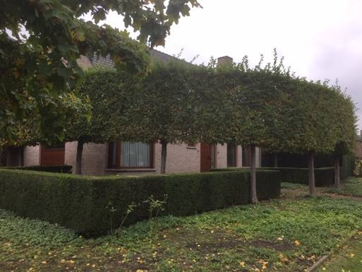 Boligbytte i  Belgia,Aalter, België,Comfortable house with garden in Aalter,Home Exchange & House Swap Listing Image